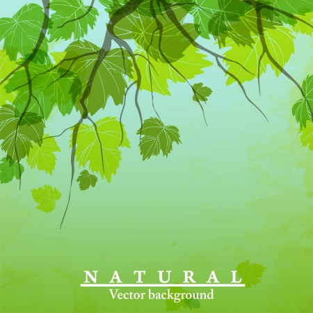 Fresh green leaves on natural background. Vector illustration. Eps 10. Stock Vector - 16951988