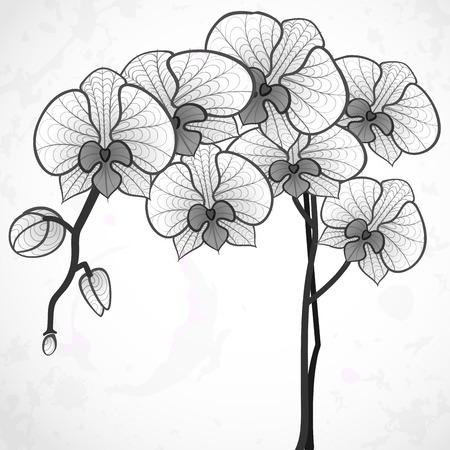 patrones de flores: Dibujo de la mano de la flor de la orqu�dea. Foto de archivo