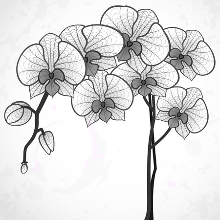 black outline: Hand Drawing Orchid Flower. Stock Photo