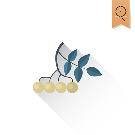 viburnum: Berries Bunch of Viburnum. Single Flat Autumn Icon . Simple and Minimalistic Style. Vector