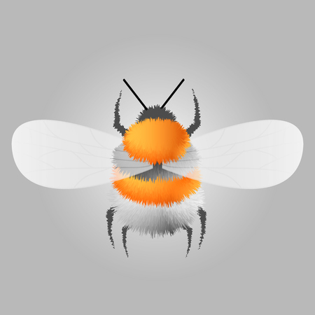 Vector engraving illustration of honey bee on gray background