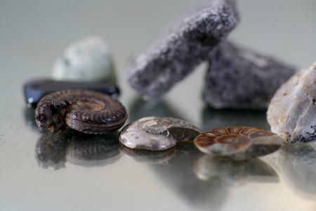 Auction of ammonite more than millions of years old called cephalopods