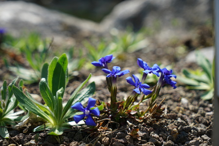 Rare plants from other countries, which grow with good care in Germany Imagens