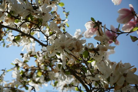 Flowering plants spotted and photographed in spring in Germany Stock Photo