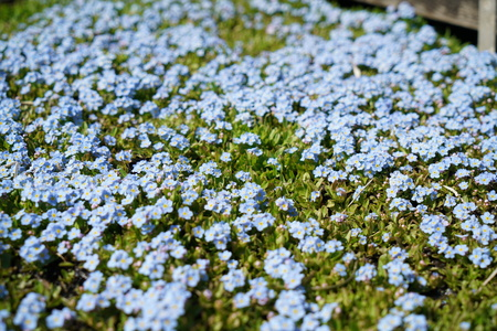 Flowering plants spotted and photographed in spring in Germany Imagens