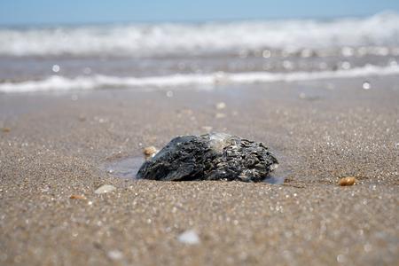 Various seashells peeled on the Atlantic beach in Portugal