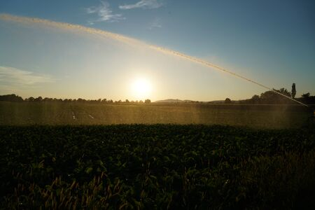 Long lasting drought in Germany due to lack of rain in agriculture requires artificial irrigation