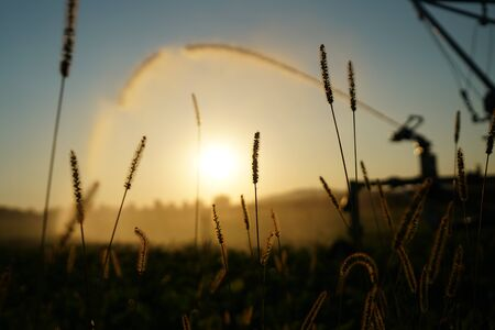 Long lasting drought in Germany due to lack of rain in agriculture requires artificial irrigation Фото со стока
