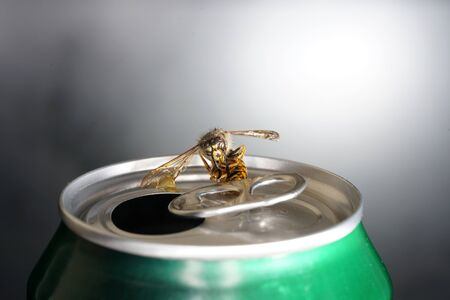 Bee in a soda can with macro shot photographed in best resolution Stock Photo