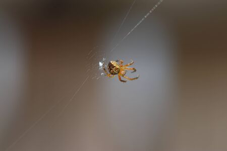 Spiders in the garden in Germany with net and taken as macro in best quality