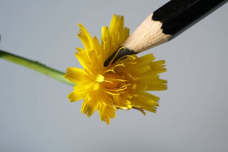Lifelike flowers as a template for drawing with colored pencils Stock fotó