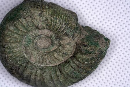 Ammonite is a fossilization of a squid enclosure, photographed here with macro lens in studio
