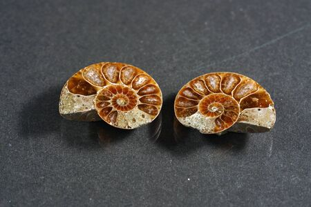 Ammonite is a fossilization of a squid enclosure, photographed with macro lens in studio