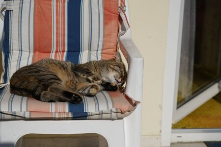 Cat streaked gray and white recovers in a deck chair and grooms