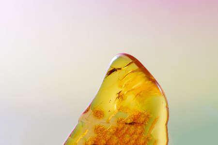 Amber made of yellow transparent fossil resin with insect inclusions photographed in the studio