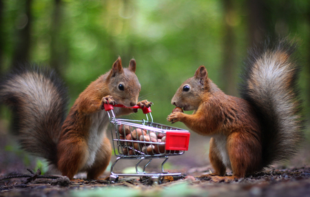 Two squirrels near the cart with nuts