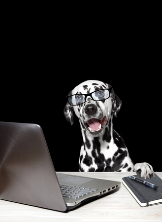 dalmatian: Dalmatian with laptop and notebook. Black background Stock Photo