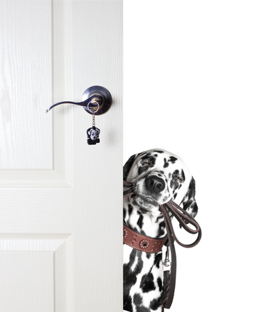 Dog with a leash peeks out from behind the door. He wants to go for a walk