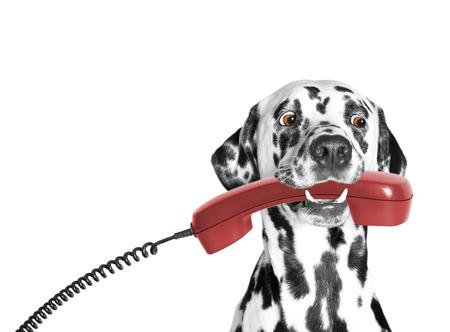 le chien tient le téléphone dans sa bouche Banque d'images