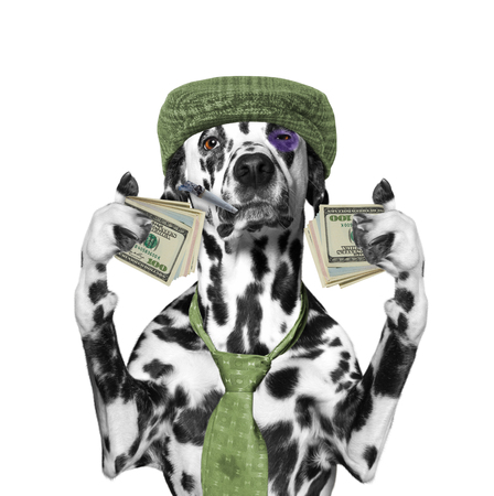 profit celebration: drunk dog holds a lot of money in the paws -- isolated on white background Stock Photo