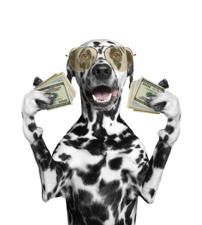 Dog in glasses holds in its paws a lot of money -- isolated on white background 免版税图像