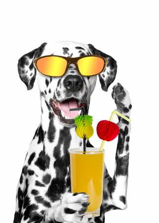 dog holding a cocktail. summer, beach, sun, heat. isolate on white background 免版税图像
