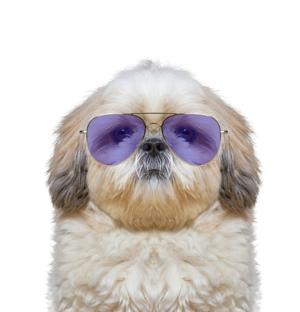 cute dog is wearing very fashionable glasses Stock Photo