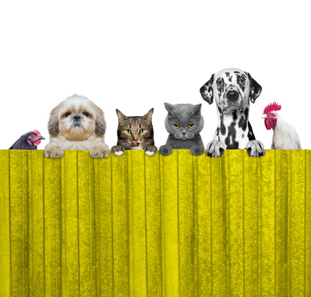 dogs, cats, chicken and cock look through a fence -- isolated