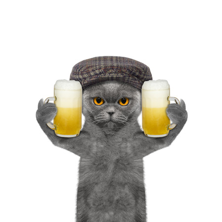 beerfest: Cat drinks beer and greeting somebody -- isolated on white