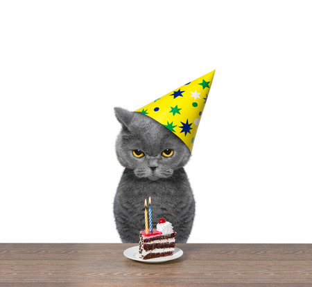 Cat celebrating birthday with piece of cake -- isolated on white background 免版税图像