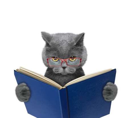 Evil cat in glasses is reading a book 免版税图像