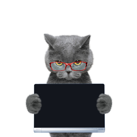 cat holds a tablet or laptop -- isolate on white background