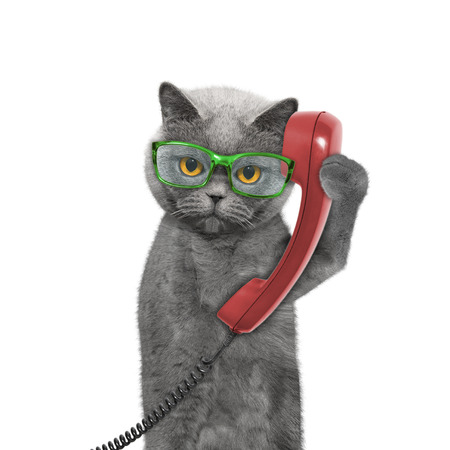 cat is talking over the old phone -- isolated on white