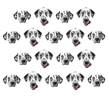 dalmatian: Pattern of dalmatian dogs isolated on white