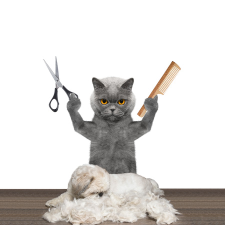 grooming: cat doing groomung to dog with scissors and comb -- isolated on white
