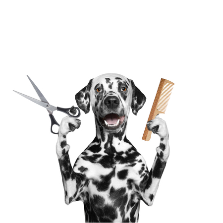 dog grooming: dog doing grooming with scissors and comb -- isolated on white