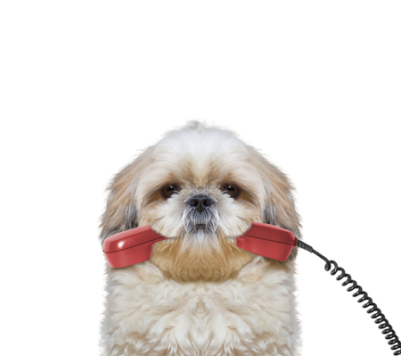 dog holds the phone in its mouth -- isolated on white