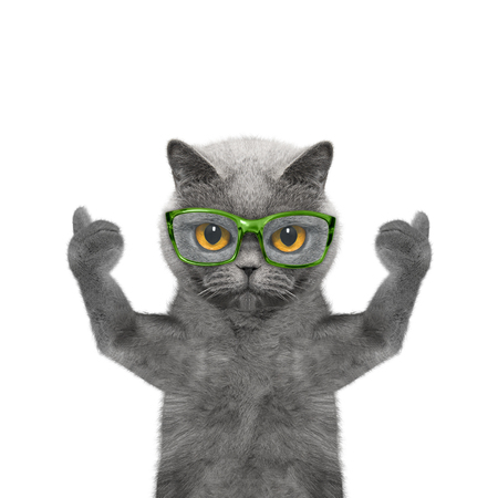 poor eyesight: cat in glasses has very poor eyesight -- isolated on white