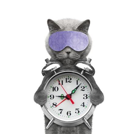 白で隔離 - 彼の足で目覚まし時計を持った猫