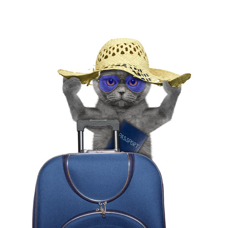 cat is going on a trip to travel with a suitcase -- isolated on white 免版税图像