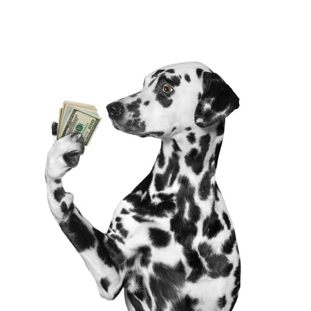charity collection: Dog holding in its paws a lot of money -- isolated on white