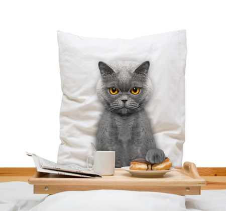 blank newspaper: cat eats in bed and drink -- isolated on white Stock Photo