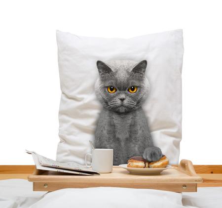 kat eet in bed en drinken - geïsoleerd op wit