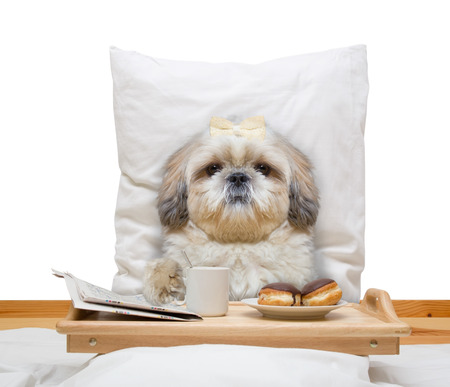 dog eats in bed and drink -- isolated on white 免版税图像