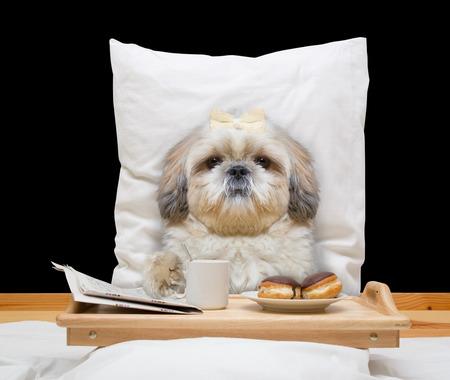 강아지 침대에서 먹고 마시는 - 블랙에 격리 스톡 콘텐츠