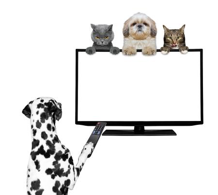 sedentario: Los perros y gatos que miran la televisión - aislados en blanco