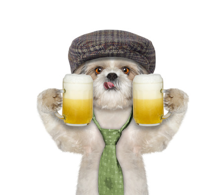 beerfest: Dog drinks beer and greeting somebody -- isolated on white Stock Photo