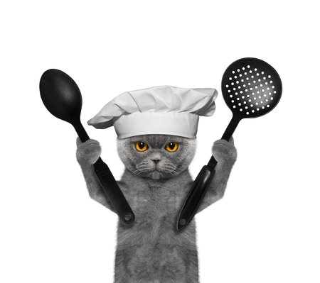 Cat chef is going to prepare meals -- isolated on white