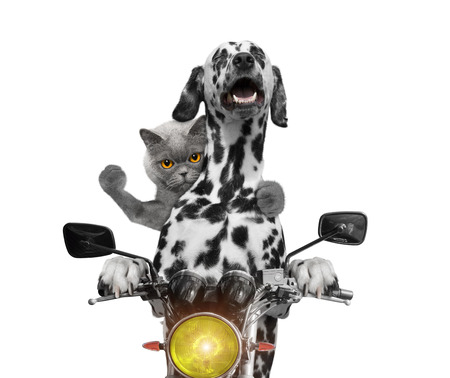happy dog and cat ride on a motorcycle -- isolated on white 免版税图像