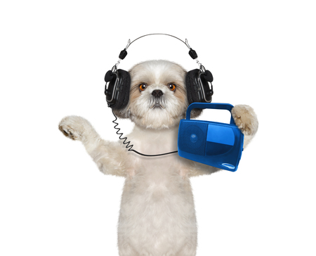 mp3 player: Dog listening to music and dancing -- isolated on white background